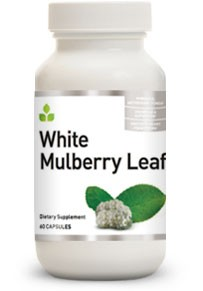 Buy White Mulberry Leaf